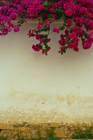 spanish house: A colonial wall with a Bougainvillea plant overhanging