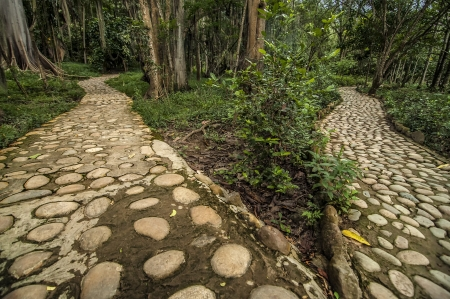 diverging: An image of two diverging paths in a forest  Stock Photo