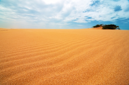 appearing: A shrub appearing from the Taroa Sand Dune in Guajira, Colombia