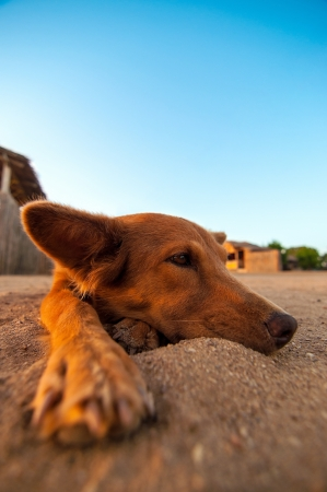 A lazy dog lying in the sand at a beach and relaxing  Stock Photo - 14978627