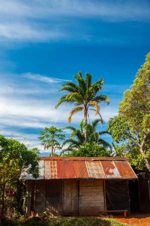 An old shack in the jungle  Stock Photo - 15179330