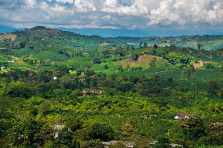コロンビア s コーヒー産地で風景のビュー