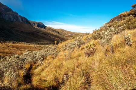 ruiz: The landscape of the Nevado del Ruiz National Park in Colombia