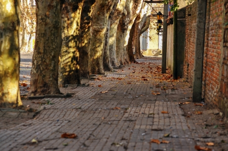 A historic tree lined street in Colonia, Uruguay Imagens - 15548177