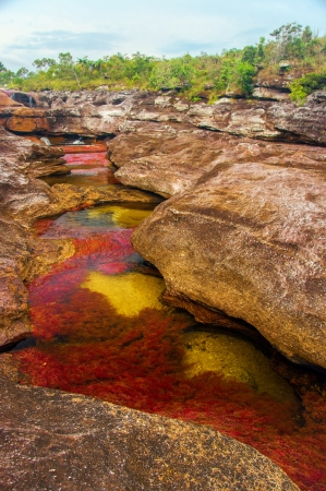A beautiful red and yellow river in Colombia  Stock Photo - 15581667