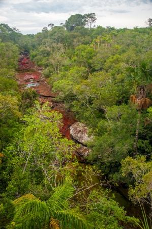 The beautiful colors of Cano Cristales in Colombia  Stock Photo - 15581664