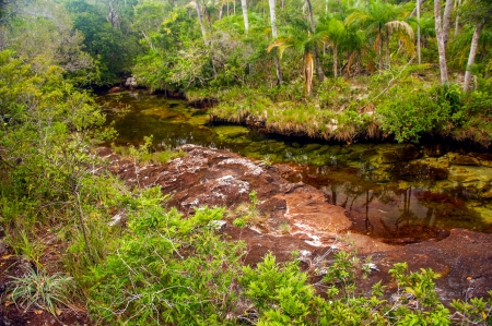 A red Colombian river deep within a jungle  Stock Photo - 15581688