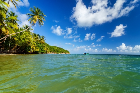 palm lined: View of Caribbean Sea and palm tree lined shore in San Andres y Providencia, Colombia Stock Photo