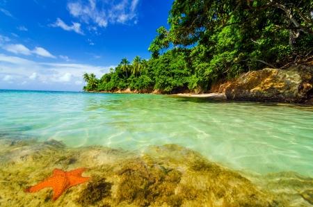 サン Andres y プロビデンシア島、コロンビアで緑豊かな緑の島の横にある水のカリブ海のヒトデ