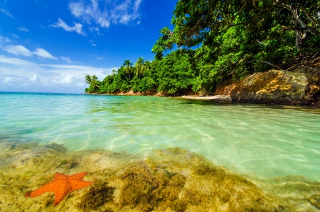 Starfish in Caribbean water next to a lush green island in San Andres y Providencia, Colombia Stock Photo