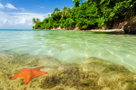catalina: A starfish in crystal clear water in San Andres y Providencia, Colombia