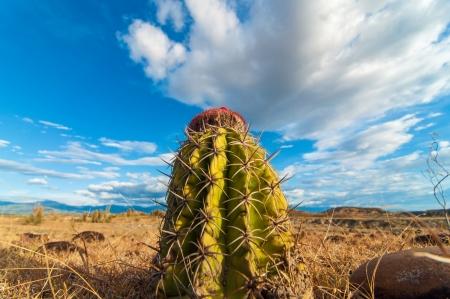 huila: Closeup cactus with a deep blue sy Stock Photo