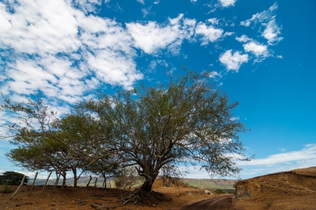 huila: Country road in a desert with a dry old twisted tree in Huila, Colombia