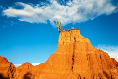 huila: A cactus perched atop a beautiful red desert hill in Tatacoa desert in Huila, Colombia Stock Photo