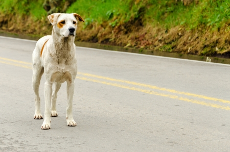 stray: A stray dog standing in the middle of a highway