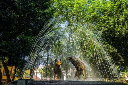A fount with dog statues in Coyoacan in Mexico City photo