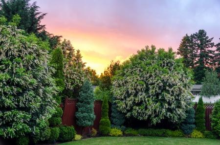 suburban: Beautiful sunset in a nice suburban backyard near Portland, Oregon Stock Photo