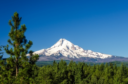 mt: Mt  Hood rising above a pine tree forest in Oregon Stock Photo