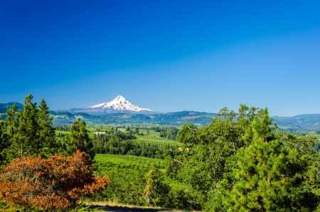mount hood national forest: Snow capped Mt  Hood rising above a valley in Oregon Stock Photo