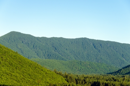 blanketed: Lush green hills blanketed in tall pine trees Stock Photo