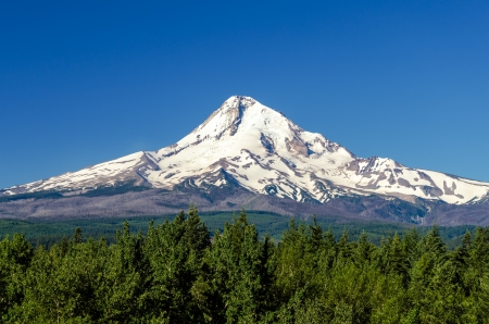 Snow capped Mt  Hood rising high above a forest Imagens
