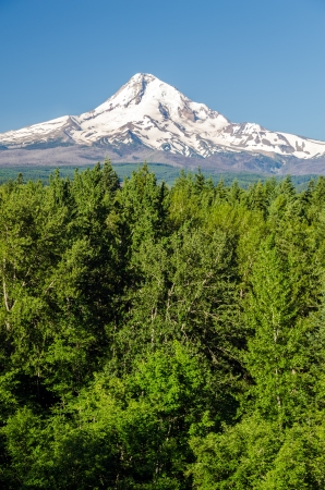 mt  hood national forest: Vertical view of Mt  Hood rising above a forest in Oregon Stock Photo