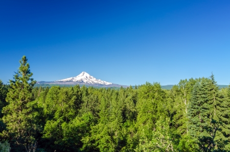 mt hood: Mt  Hood National Forest with the mountain seen in the background