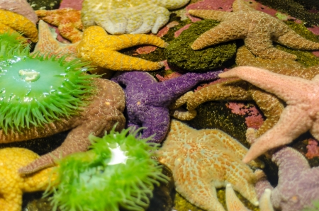 tides: Green anemones and starfish are various colors
