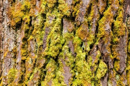 Moss covered tree bark texture photo