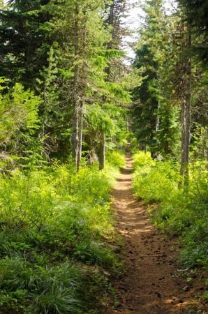 mt  hood national forest: Trail passing through a lush green forest in Oregon Stock Photo