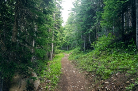 mt  hood national forest: Path running through an evergreen forest in Oregon