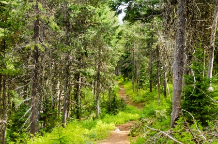 national forest: Trail running a trav�s de Mt Hood National Forest