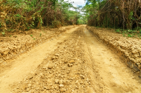 road conditions: A rough dirt road passing through trees in an arid region in La Guajira, Colombia