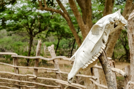 fencepost: An old white cow skull on a fencepost Stock Photo