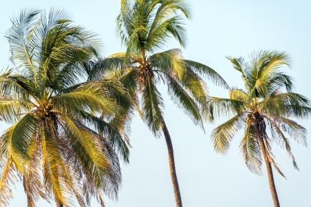 three palm trees: Three palm trees in Cartagena, Colombia