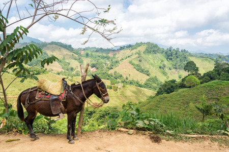 A donkey with lush green hills  in rural Colombia Stock Photo