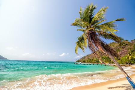 White sand beach and beautiful palm tree in La Miel, Panama near Capurgana, Colombia photo