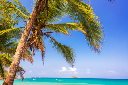 View of a palm tree and the blue and turquoise Caribbean Sea on the horizon in Capurgana, Colombia photo