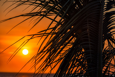 marta: Stunning orange sunset against the silhouette of a palm tree in Santa Marta, Colombia