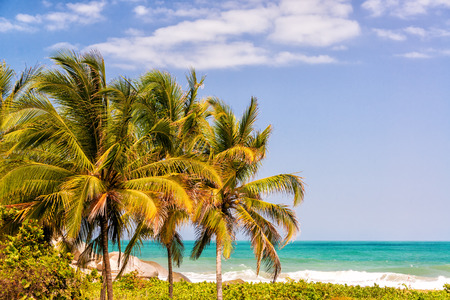 three palm trees: Three palm trees in Tayrona National Park in Colombia with the Caribbean Sea visible in the background Stock Photo