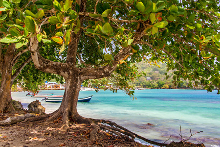 View of the Caribbean Sea from under a tree in Sapzurro, Colombia photo