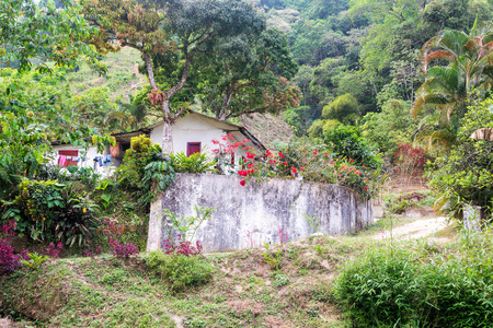 green vegetation: Small house with lush green vegetation on a coffee farm in Colombia Stock Photo