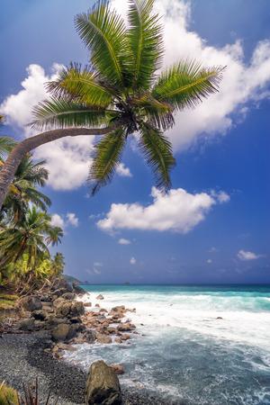 View of a single palm tree extending over the sea near Capurgana, Colombia photo