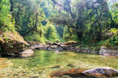 강은 콜롬비아 시에라 네바다 데 산타 마르타의 정글을 통해 실행 스톡 콘텐츠