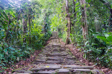 Stone stairs in the jungle at Ciudad Perdida, the lost city of Colombia