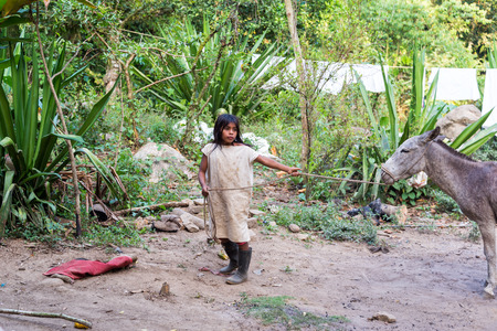 marta: MAGDALENA, COLOMBIA - FEBRUARY 4   Young indigenous boy with a donkey in the Sierra Nevada de Santa Marta in Colombia