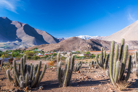 View of cactus with Andes mountains in the background in the Elqui Valley in Chile