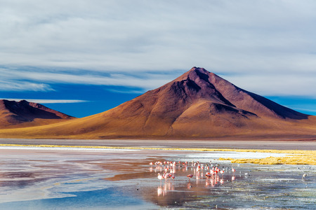andean: Flamingoes at the base of an Andean volcano in Uyuni, Bolivia in Laguna Colorada Stock Photo