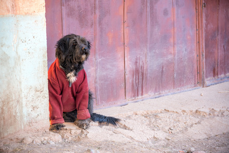Black dog wearing a red sweater in Tupiza, Bolivia