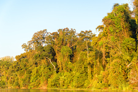 amazon river: Foliage of the Amazon rainforest bathed in golden light at sunset in Madidi National Park in Bolivia